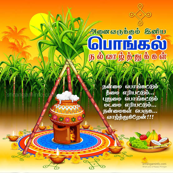 Pongal 2020 Wishes, images, quotes, messages, status, and wallpapers
